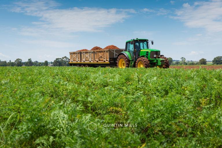 Rugani Carrots image library. Commercial photography portfolio